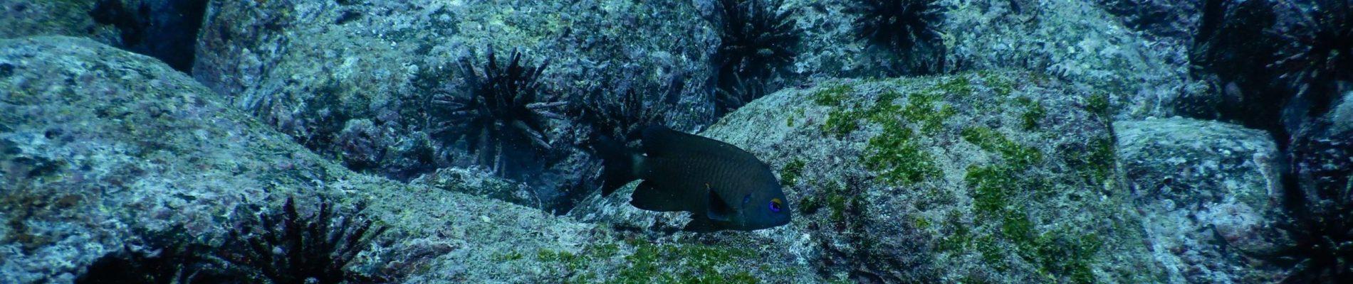 GalapagosReefs